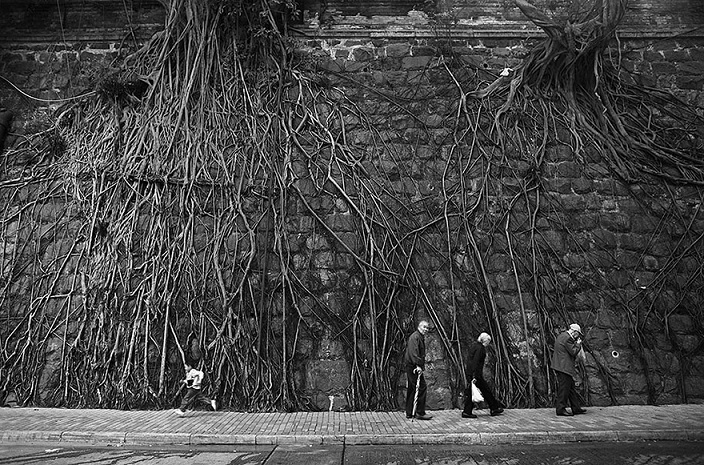 flower-tree-growing-concrete-pavement-39