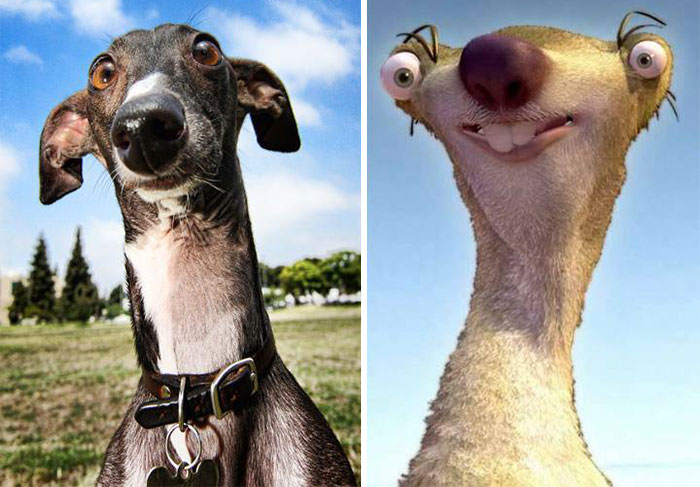 20-Dogs-That-Look-Like-Something-Else7__700