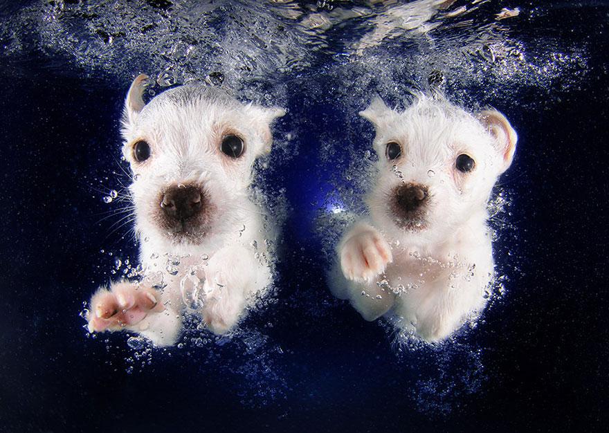 underwater-puppy-photography-seth-casteel-2