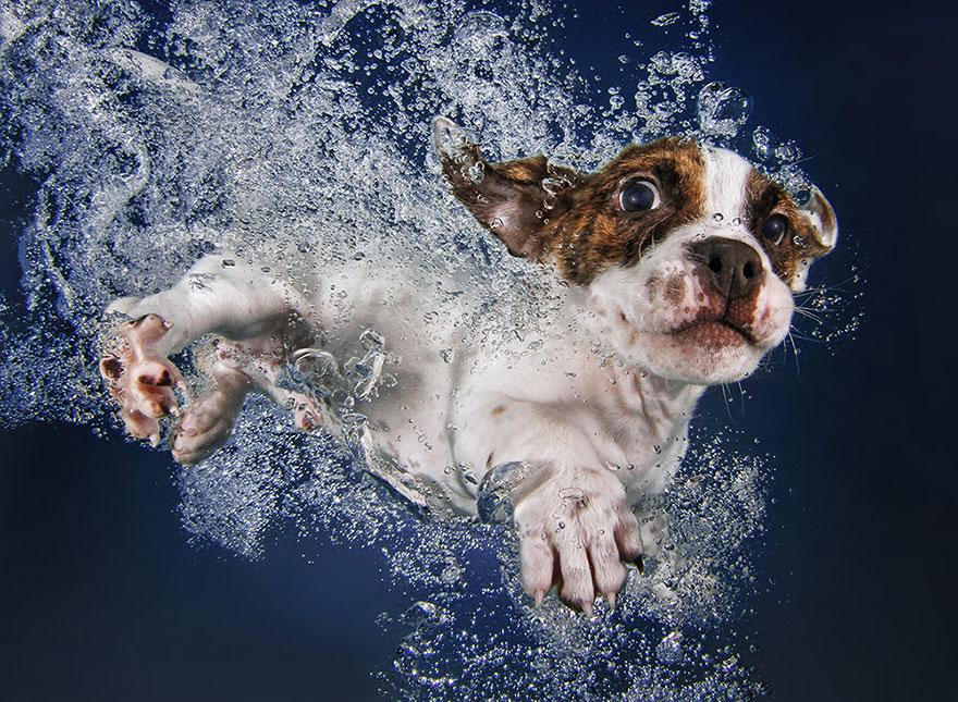underwater-puppy-photography-seth-casteel-3