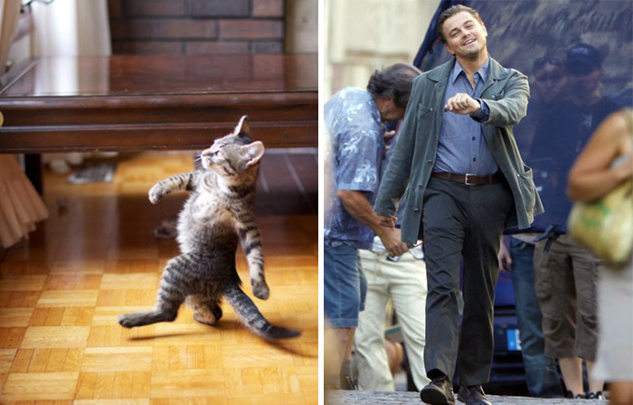 Leonardo cat.