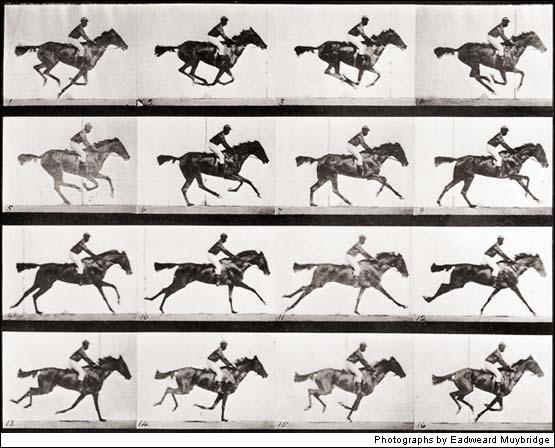 Táto séria dvanástich fotografií bola medzník v biológii, pretože ukázala, že kôň pri behu v istom momente nemá ani jednu nohu na zemi.
