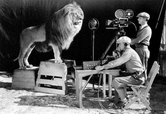 Kameraman nahráva rev leva na oficiálne logo MGM.