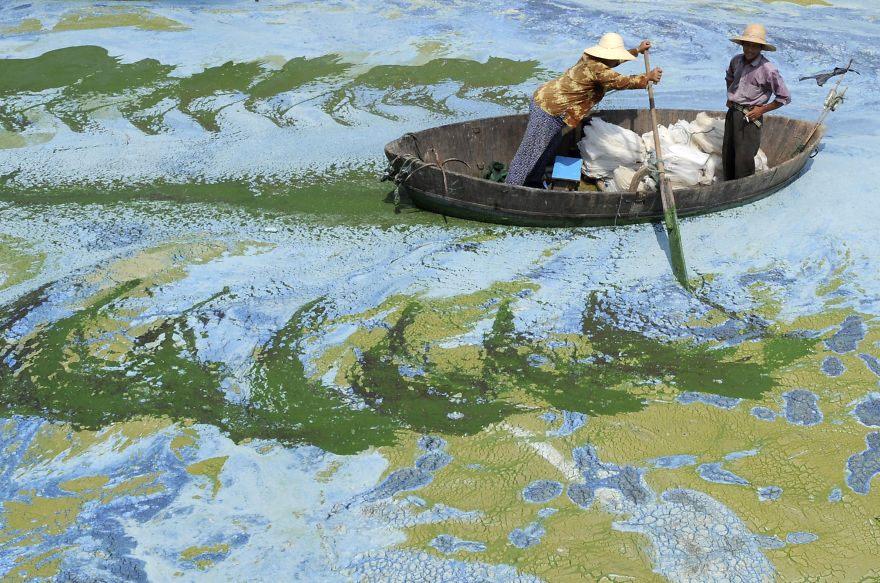 Rybár sa prediera cez jazero Chaohu, ktoré je preplnéne riasamy a extrémne znečistené.