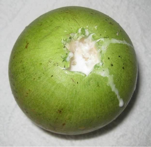 Mliečne ovocie.