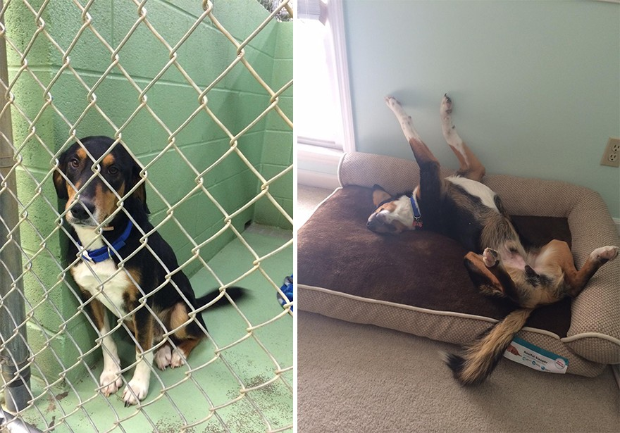 pet-adoption-before-and-after-5__880