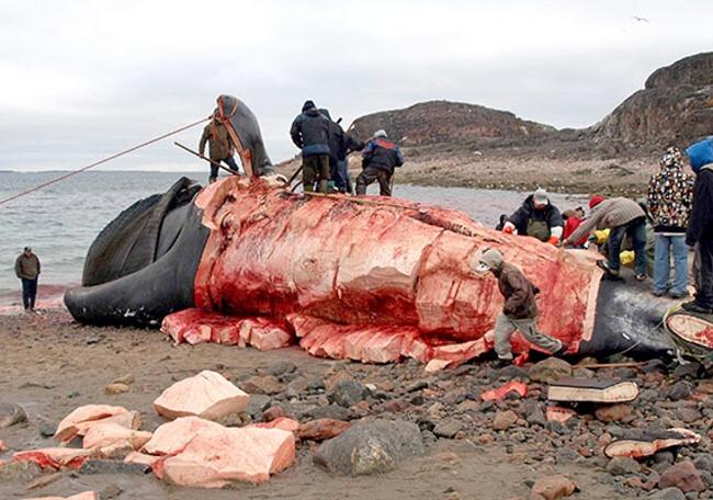 Pre ľudí, ktorí žijú vArktíde, je oceán zdrojom väčšiny ich potravy. Tradične jedia tamojší ľudia ryby, príležitostne veľryby či tulene.