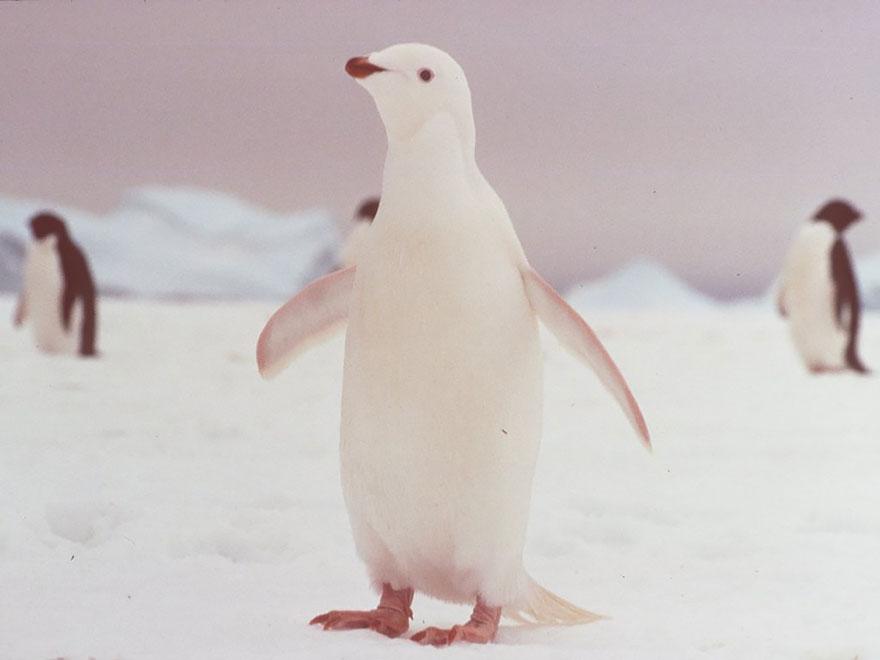 albin12
