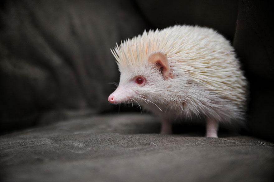 albin9