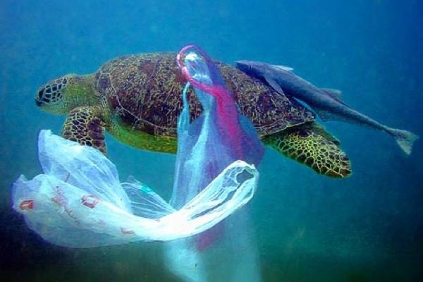 Morské živočíchy, nevedome prehĺtajú igelitové tašky, pretože si myslia, že to sú medúzy.