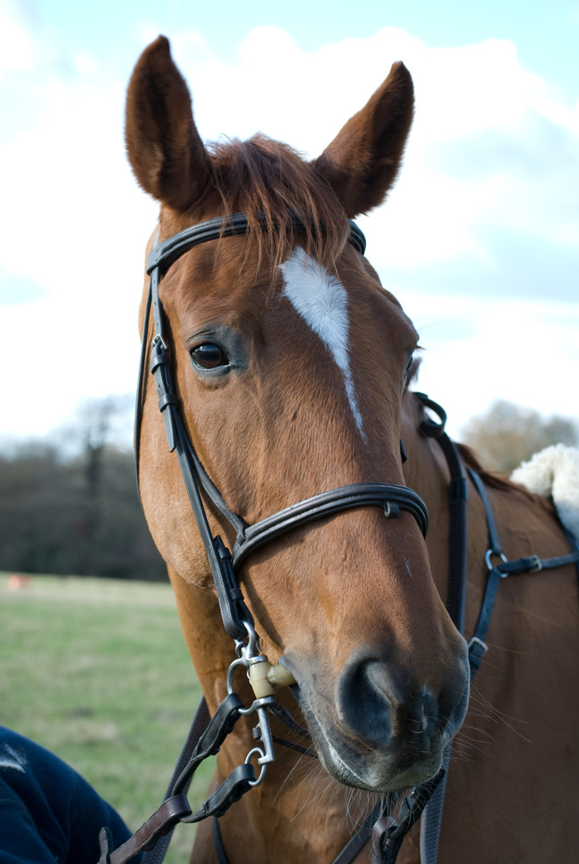 Kenneth Pinyan zomrel pri pokuse mať pohlavný styk s koňom.