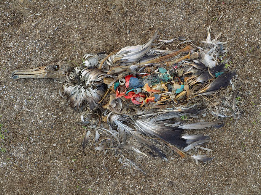 environmental-problems-pollution-9__880