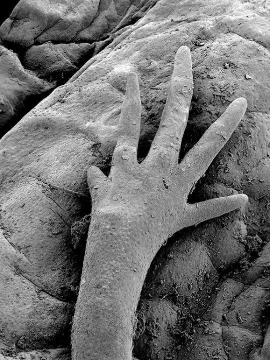 microscop1