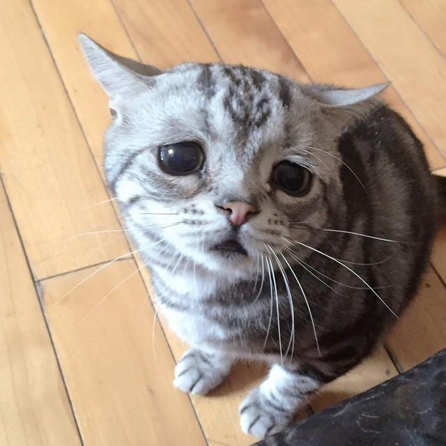 smutna macka (1)