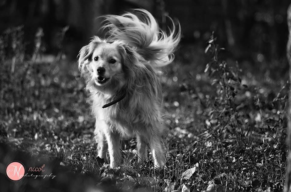 fotografie psov (10)
