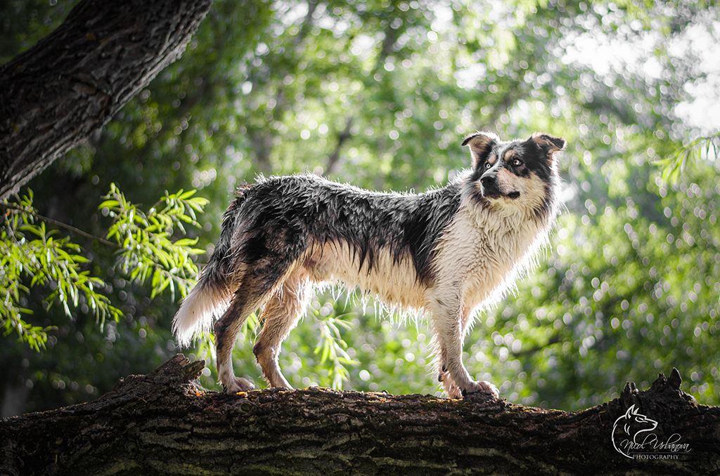 fotografie psov (11)