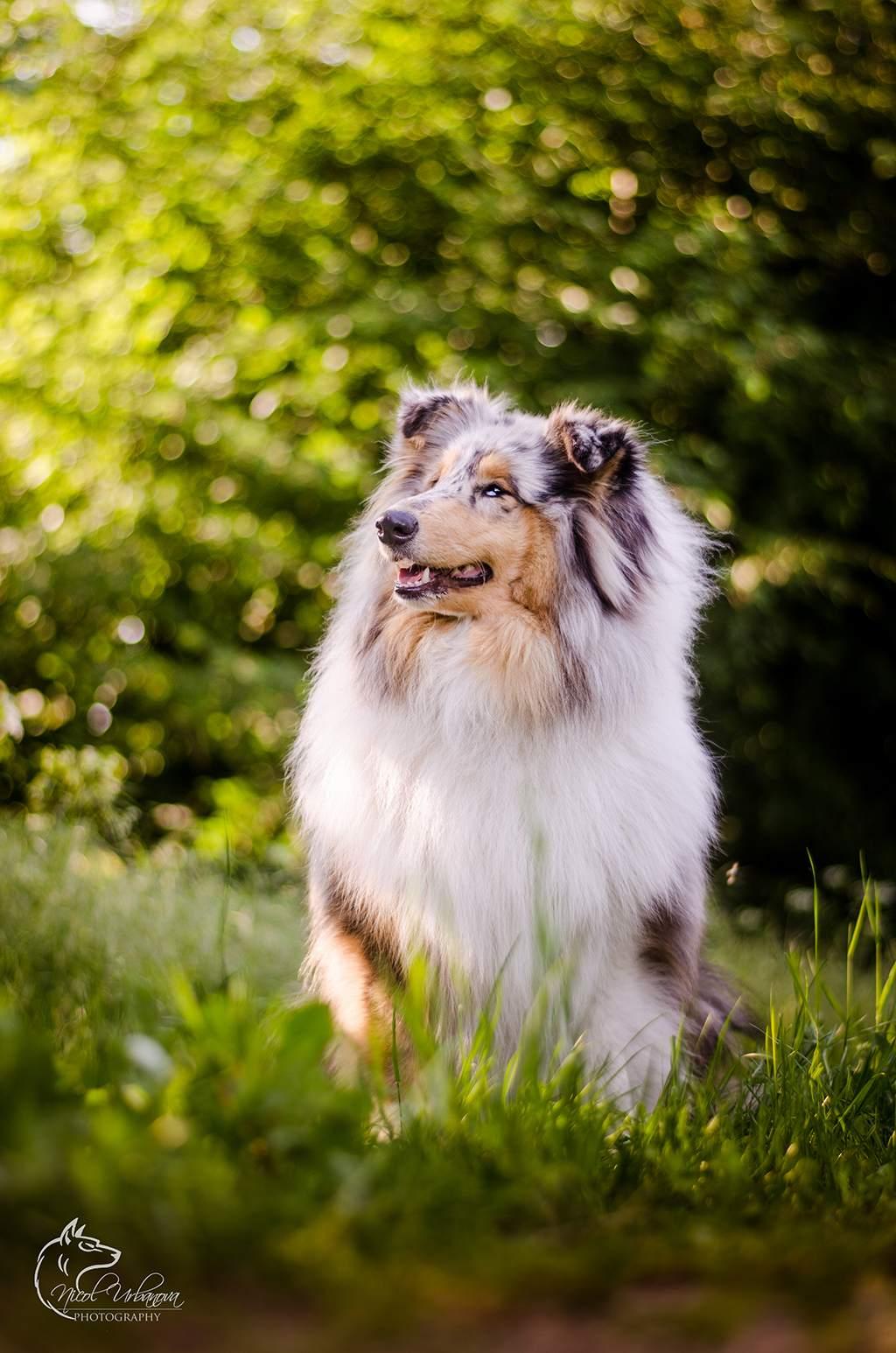 fotografie psov (6)