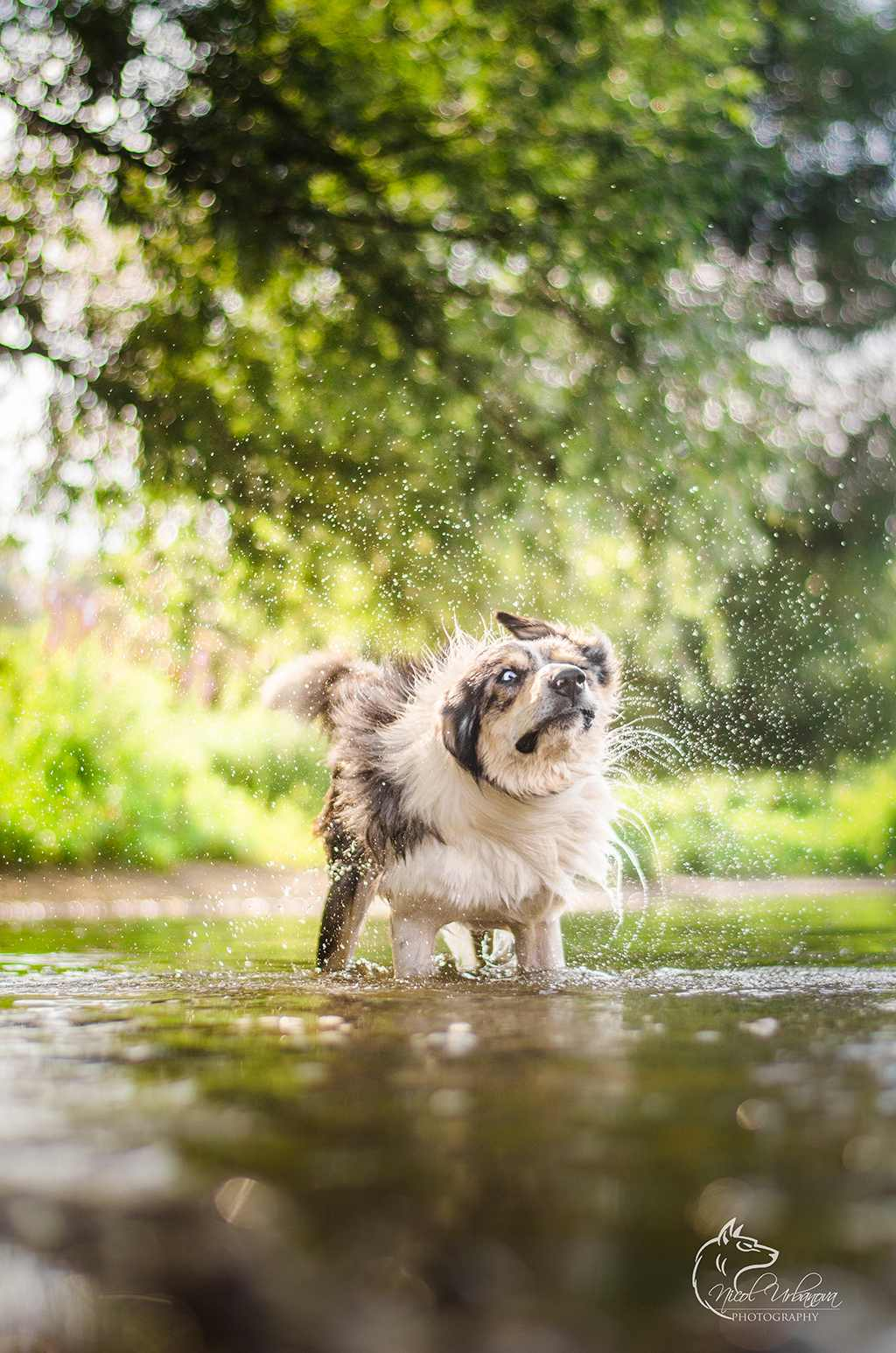 fotografie psov (9)