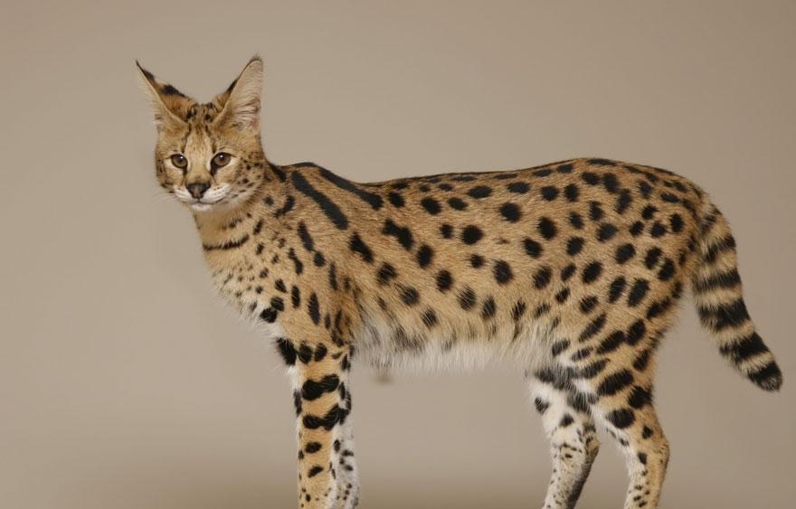 hybridne zvierata (4)