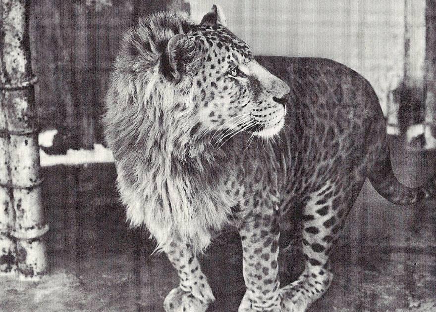 hybridne zvierata (5)