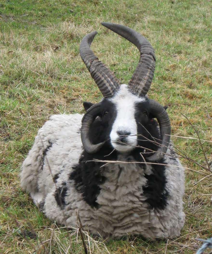 hybridne zvierata (6)