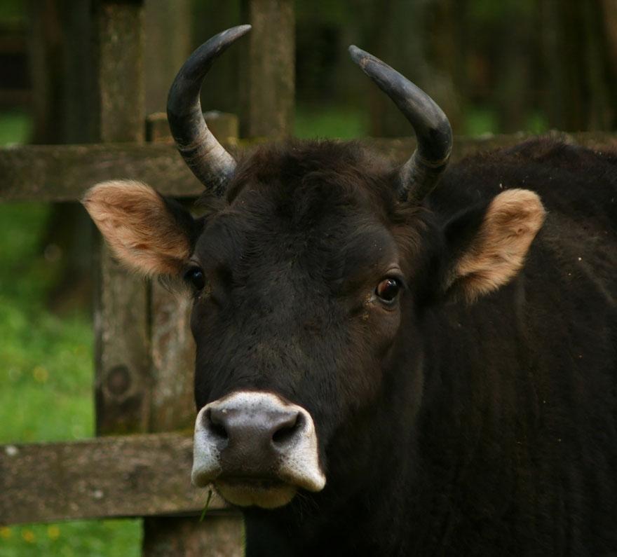 hybridne zvierata (7)