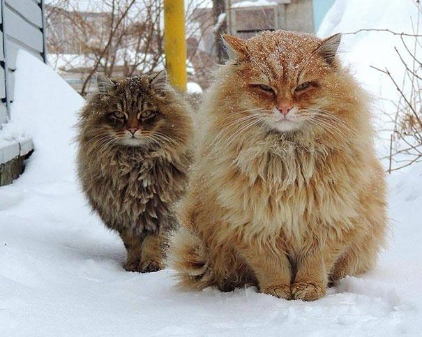 mačky3