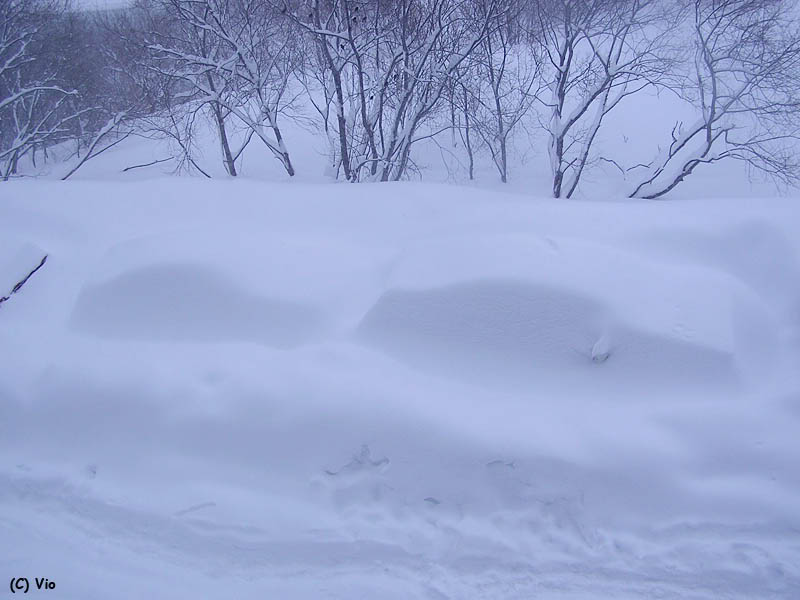 sneh-kamcatka1