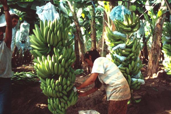 banan6