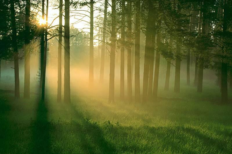 prechadzka v prirode 2