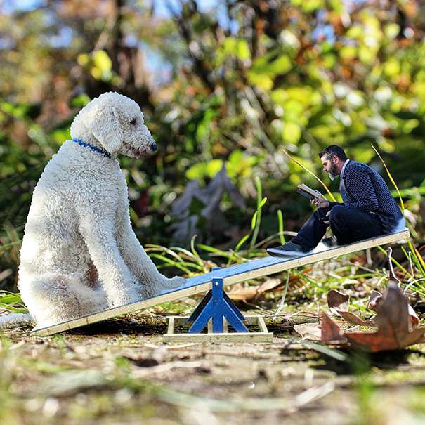 facebook.com/goldendoodleportraits