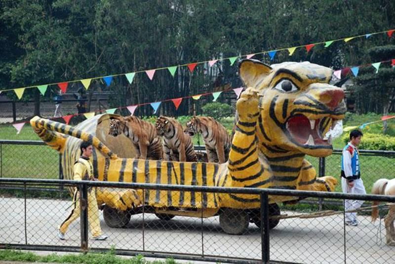 tigre 3