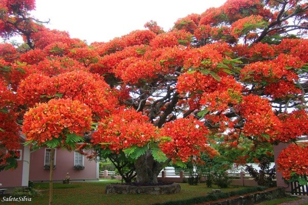 strom10