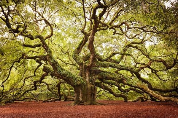 strom9