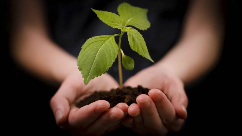 rastliny4