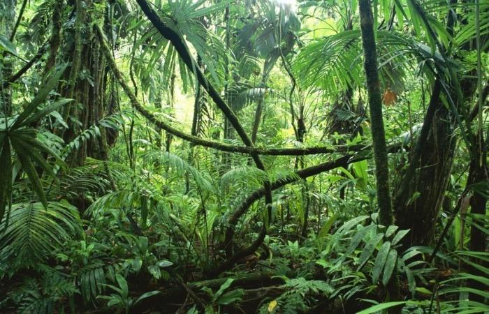 rastliny5