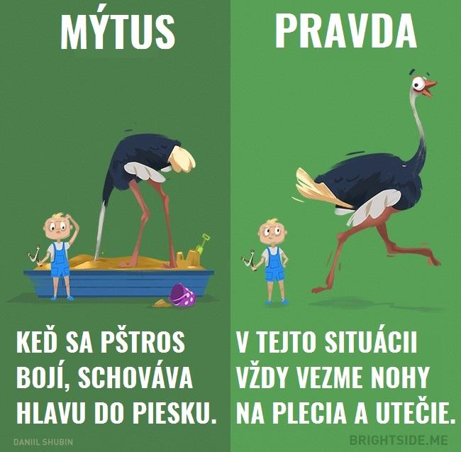 mytyzvierata3