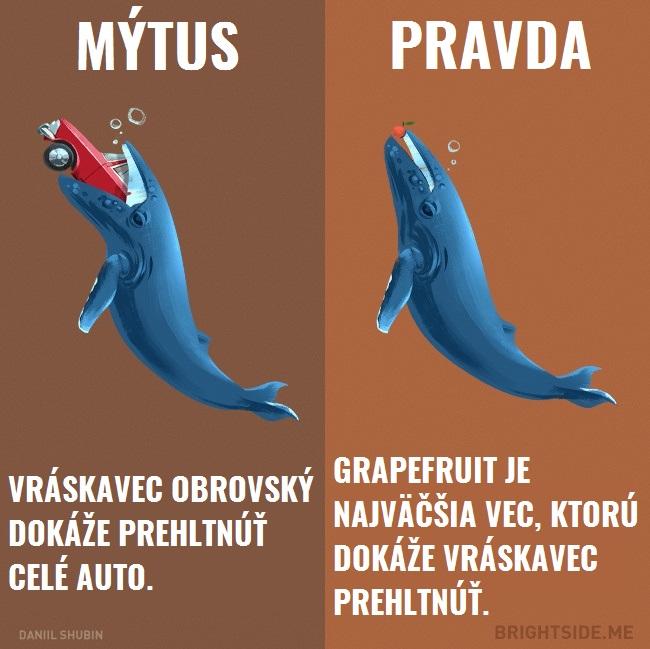 mytyzvierata7