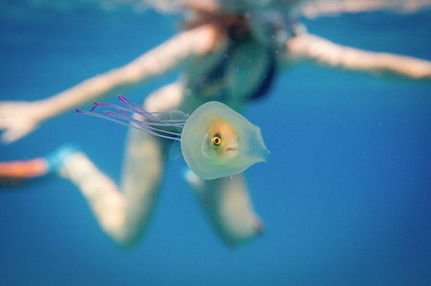 ryba-v-meduze