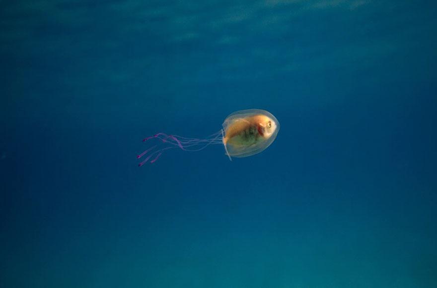 ryba-v-meduze2