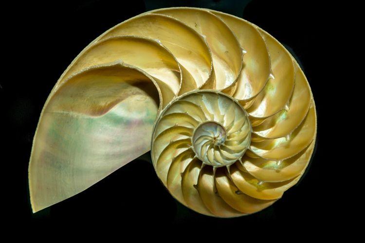 biomimicrysandiego.org