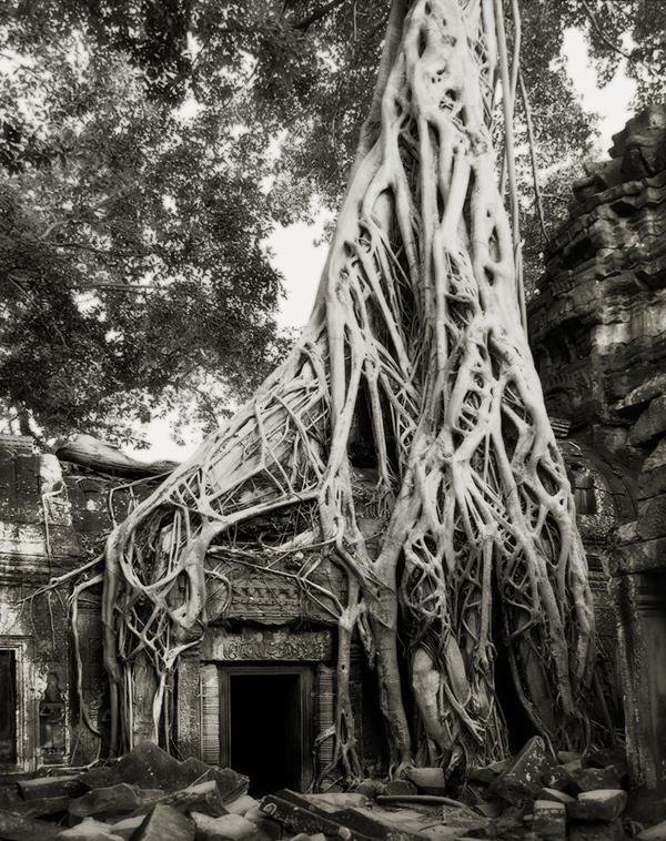 najstarsie-stromy3